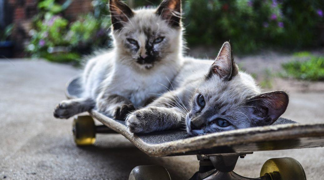cat-1022999_1920
